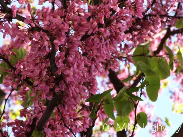 Spring in Vevey, Switzerland