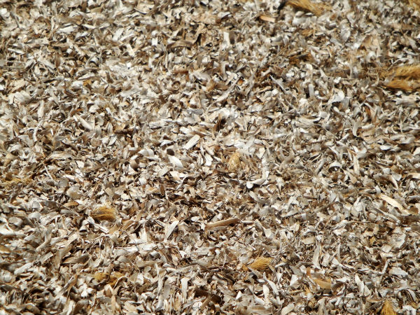 Dry Seaweed, Es Ram, Formentera (Spain)