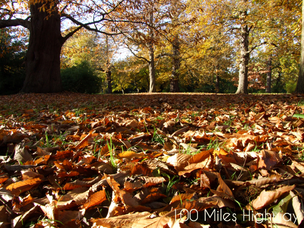 Fall in Kew Gardens, London