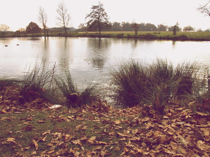 Richmond Park, London (UK)