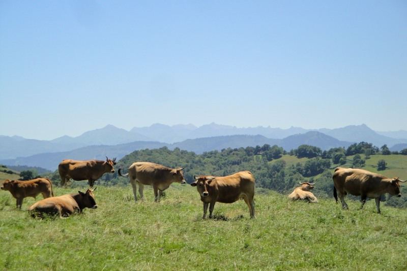 Alto de Campa, Asturias (Spain)